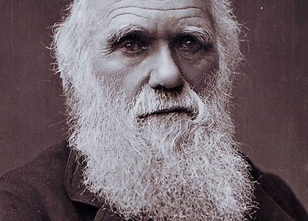 """Richard Langéen: Källtextanalys av Charles Darwins """"Om arternas uppkomst"""""""